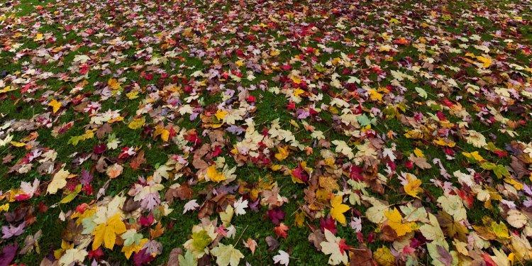 Autumn in Zurich - Natural carpet